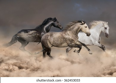 Horse herd run gallop in sandy field against dramatic sky