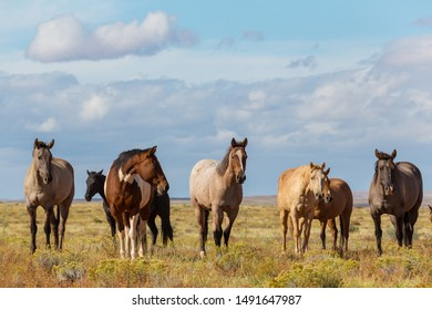 Horse herd run on pasture in Chile, South America