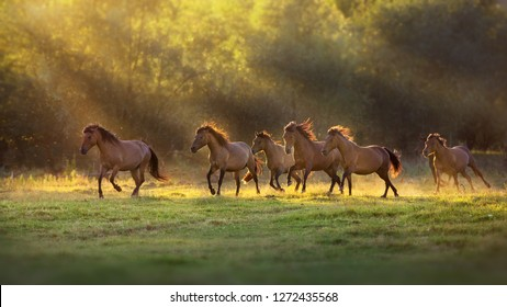Horse herd run in sunlightwith dust at summer pasture