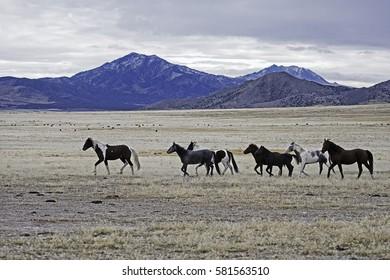 Horse Herd in Utah Desert