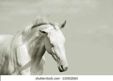 horse in high key