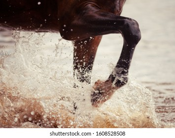Horse hitting the water with the hoof closeup. Water splash