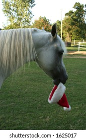 Horse hold a Santa hat