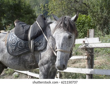horse with a homemade saddle of leather