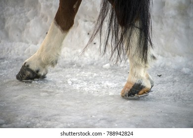 horse hoof on ice in winter snow detail