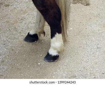 Horse hooves of a dark brown and white pony standing with tail reaching the ground