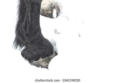 horse hooves in the snow textured, one white, one black