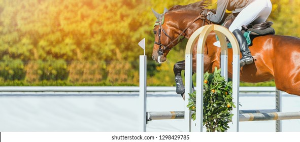 Horse horizontal banner for website header design. Rider in uniform perfoming jump at show jumping competition. Blur sunlight green trees as background.