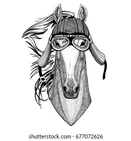 Horse, hoss, knight, steed, courser Wild animal wearing biker motorcycle aviator fly club helmet Illustration for tattoo, emblem, badge, logo, patch