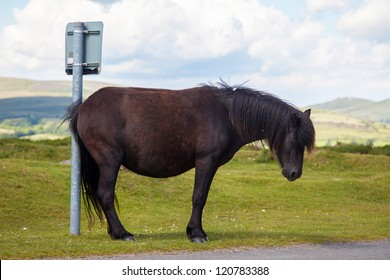 Horse humor ...?! Horse / pony scratching on sign post - or waiting for a bus? Or themes / concept for sadness / irritable / depression.