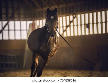 Horse inside ranch