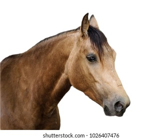 Horse isolated on the white background
