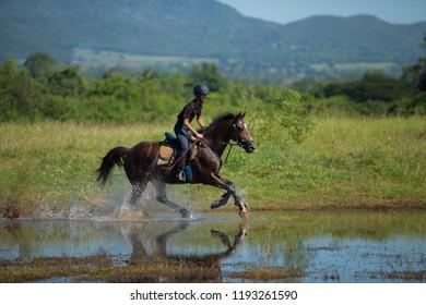 Horse And Jockey Outdoor