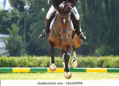 Horse jump a hurdle in competition