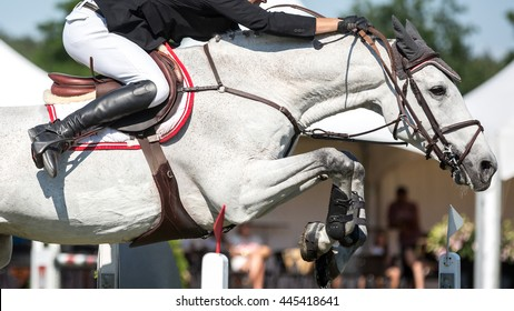 Horse jumping. Horse Riding themed photo