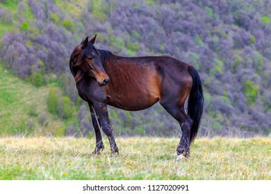 A horse of Karachai breed grazing on the background of mountains.  Russian Federation, North Caucasus, Karachay-Cherkessia.