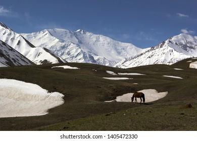 Horse in the Kyrgyz mountains