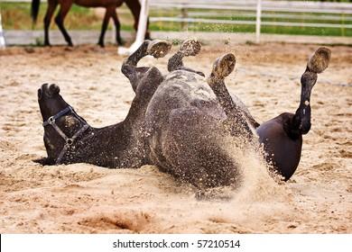 Horse laiyng in sand