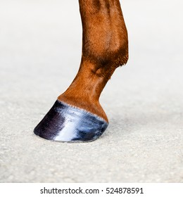 Horse leg with hoof. Skin of chestnut horse. Animal hoof closeup. Square format.
