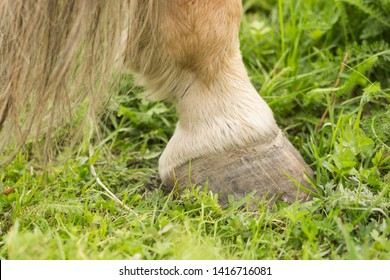 Horse leg with hoove closeup. Little of the horse tail showing.
