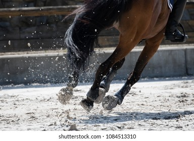 Horse legs during a dinamic galop on the sand