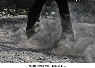 Horse legs and hoof in dust