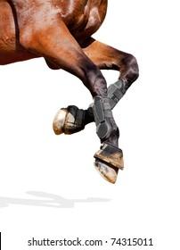 Horse legs isolated on white background.