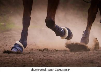 Horse legs on the dusty earth