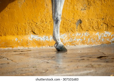 horse legs on yellow wall background