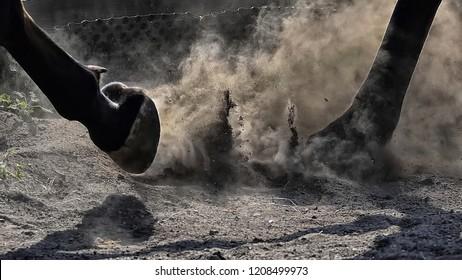 Horse legs in run, hoof in dust.