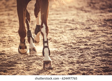 Horse legs running in sunset