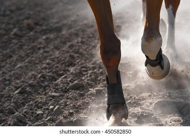 Horse legs running in twilight time