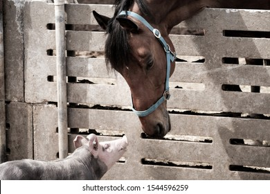The horse and the little pig