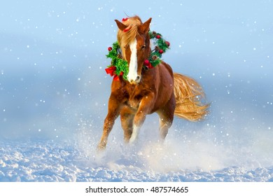 Horse with long mane run gallo in snow  wearing a wreath and a bow. Christmas image