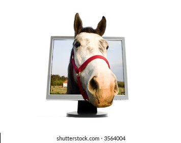 A horse look around the TFT screen