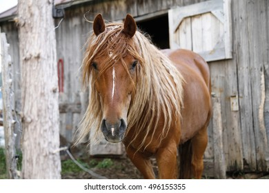 Horse looking at the camera