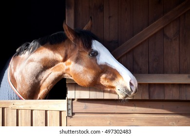 Horse looking out of a stable door.