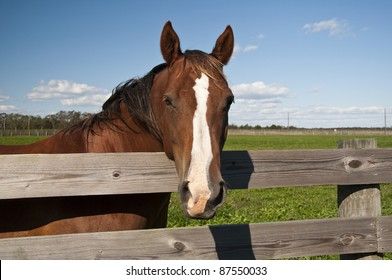 Horse looking over the fence