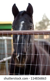 horse looking sad over fence in the camera