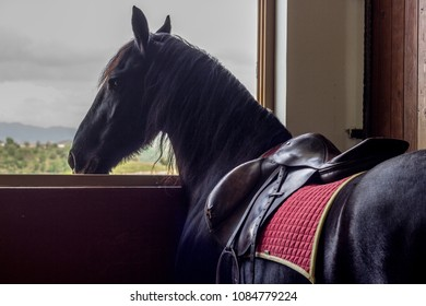 Horse looking from stables window