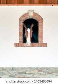Horse looking through a brick window in white wall