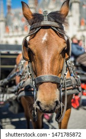 Horse in the market square with blinders blinkers on tourism in Belgium bruges europe european western brown light horse for transportation and entertainment of tourists animal cruelty Town Cobble