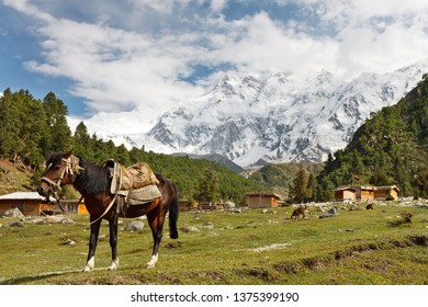 A horse and the massive Rakhiot Face of Nanga Parbat in the background. Gilgit-Baltistan, Northern Pakistan.