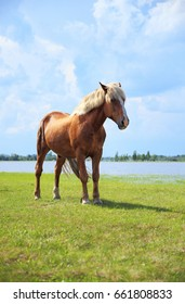 Horse in the meadow.