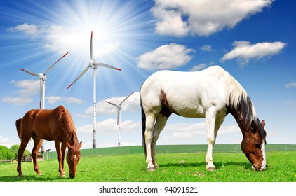 Horse in the meadow.In the background of wind turbines