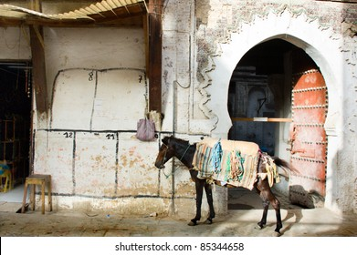 horse in the medina of Fes, Morocco