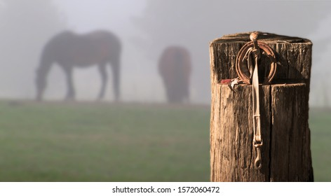 Horse in the mist in a rural landscape