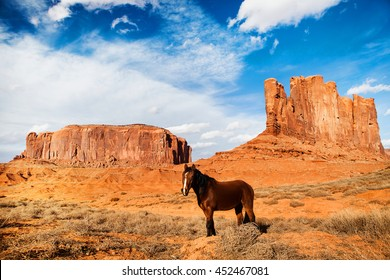 horse in the monument valley - usa - arizona