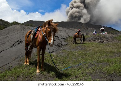 Horse and Mount Bromo is an active volcano and part of the Tengger massif, in East Java, Indonesia.