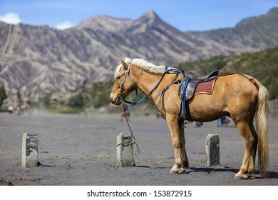 Horse and Mount Bromo, Java, Indonesia